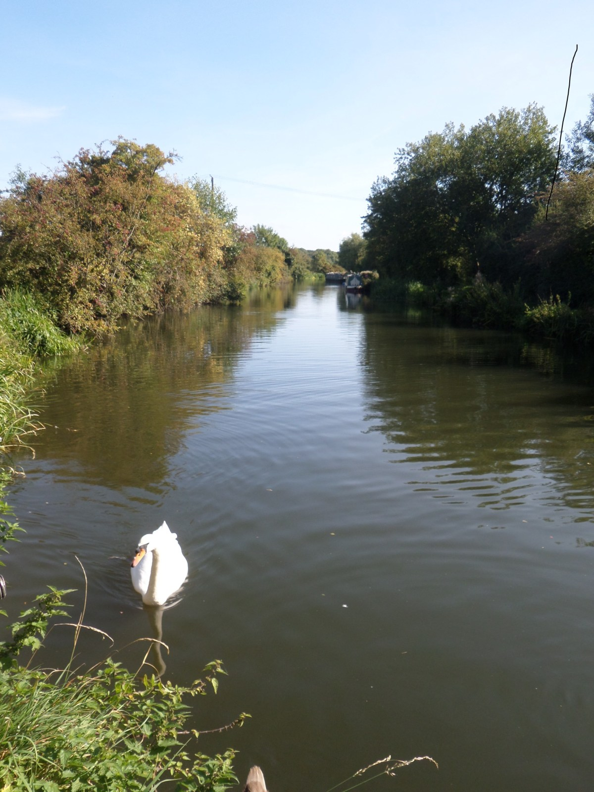 Herts Embraced 6.2:  a morning by the river