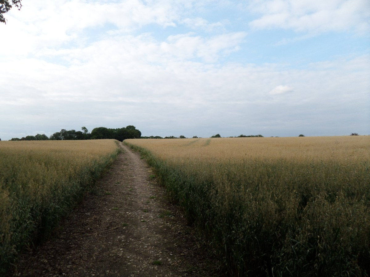 Buckinghamshire Way 1.3:  North into the Chilterns