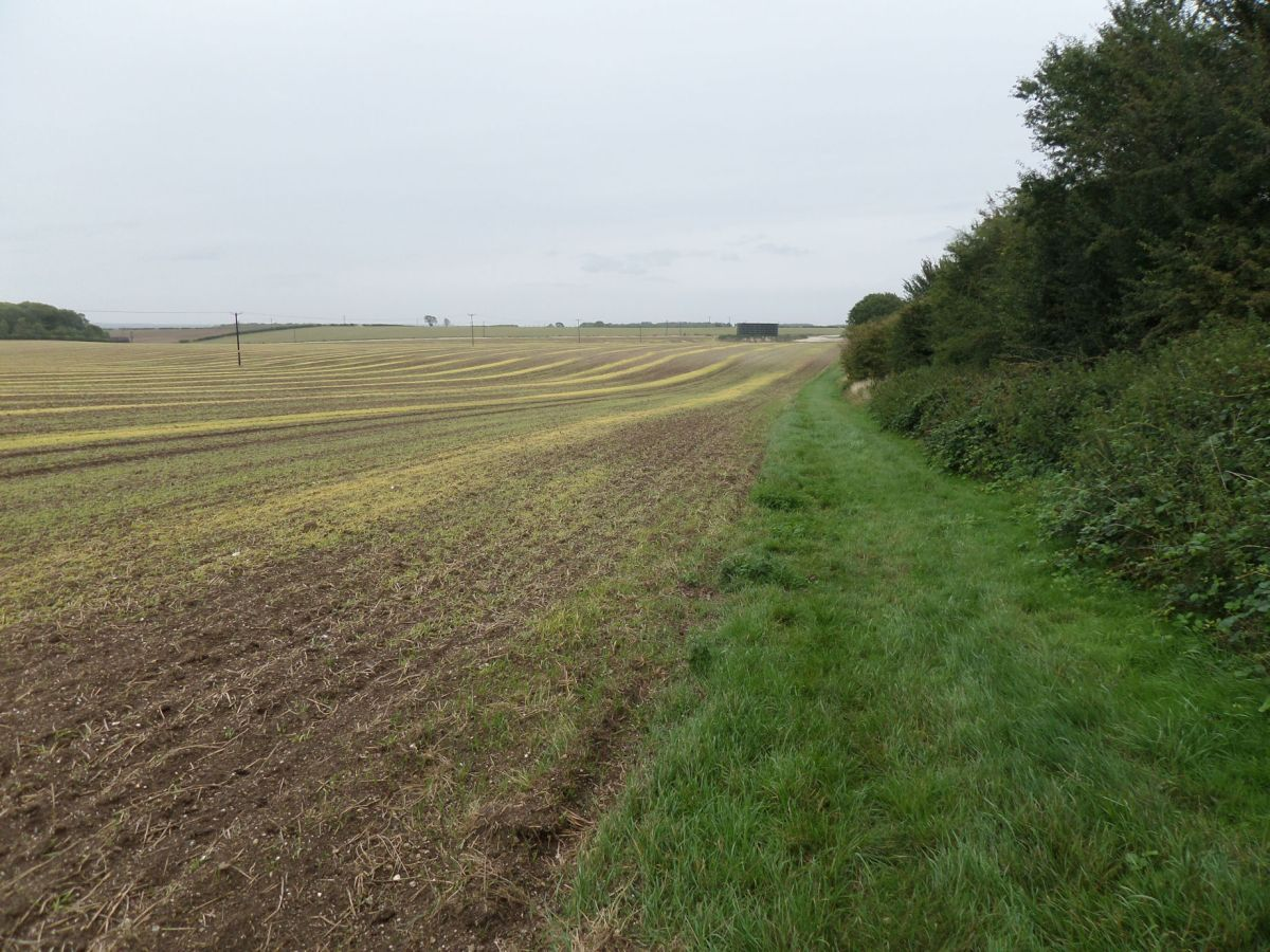 The Cambridgeshire Length 1.1: An Odsey start