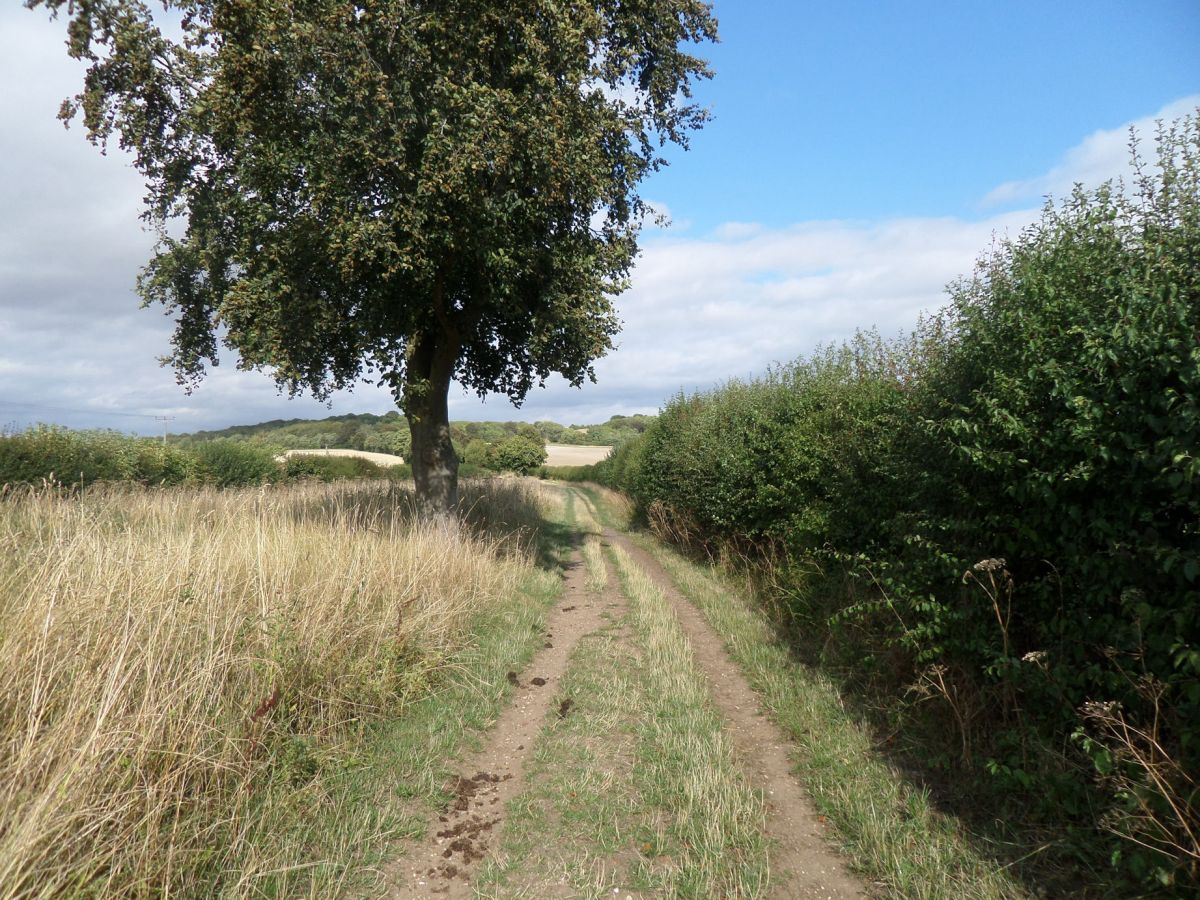 The Icknield Way Path