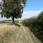 The Icknield Way Path