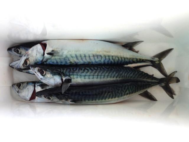 The Last Week In Photos – Fishing, Food & Falmouth Week