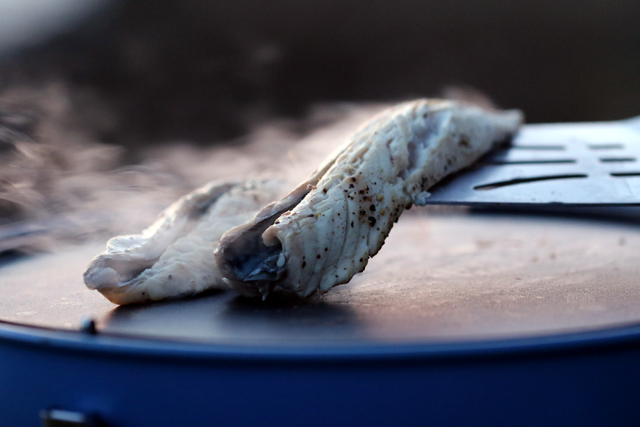 Campingaz Party Grill 400 Review – Cooking Freshly Caught Mackerel