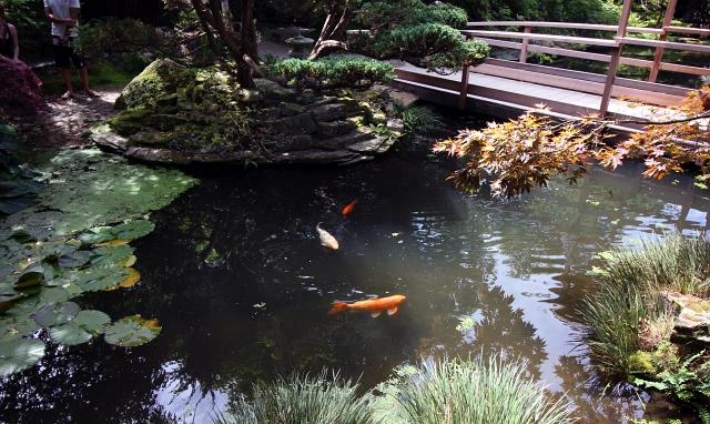 Japanese Garden Cornwall Koi