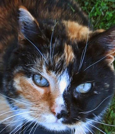 The cat is the animal to whom the Creator gave the biggest eye, the softest fur, the most supremely delicate nostrils, a mobile ear, an unrivaled paw and a curved claw borrowed from the rose-tree. ~ Colette (Sidonie Gabrielle Colette)