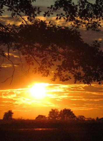sunset scene under tree, september, south indiana