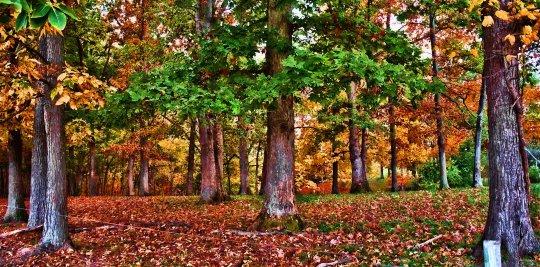 dreamy autumn woods scene, south indiana