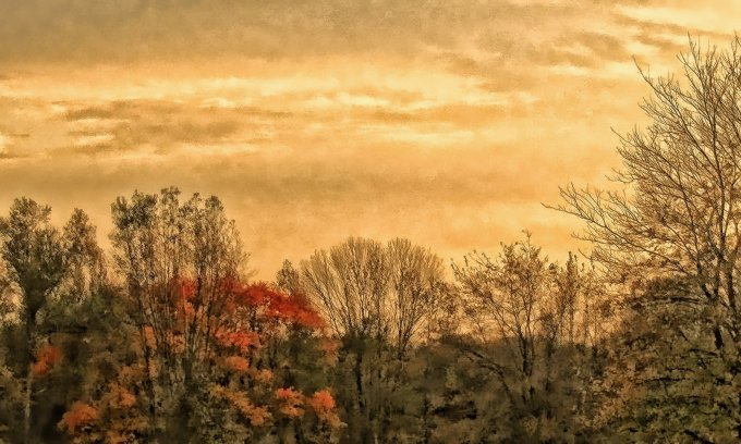 distant woods scene, october, near sunset, south indiana