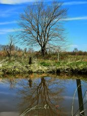 beautiful tree by pond