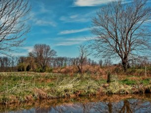 beautiful trees pano view by pond