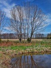 springs_trees