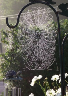 spiderwebs3