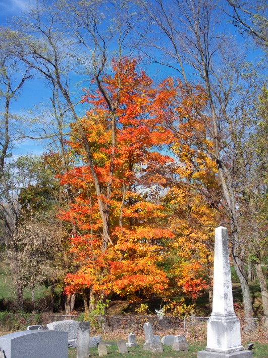 cemetery-tree2