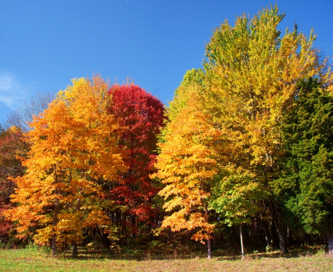 more-cem-trees_stitch