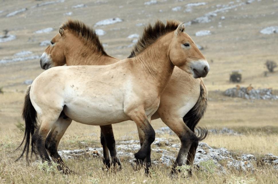 Orkhon Valley Horseback Adventure