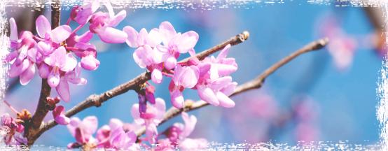 Spring icon.