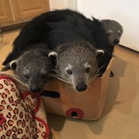 Bints in a box