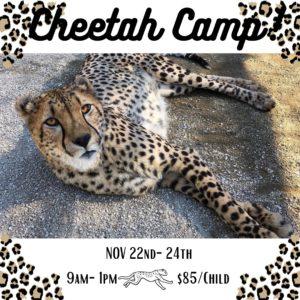 Cheetah Camp
