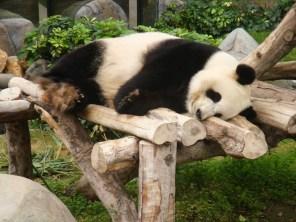 panda snooze