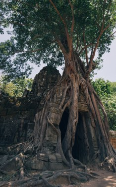 Siem_Reap_201514
