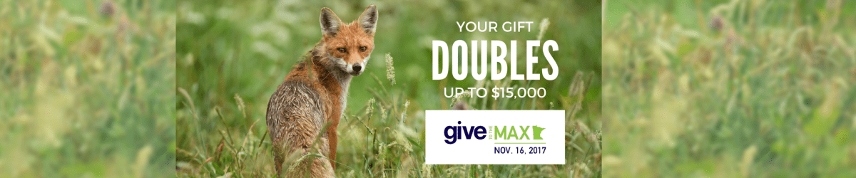 Give to the Max 2017