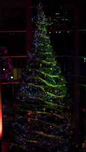 NGC Tree Lighting 2015-7
