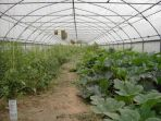 06_left_polytunnel