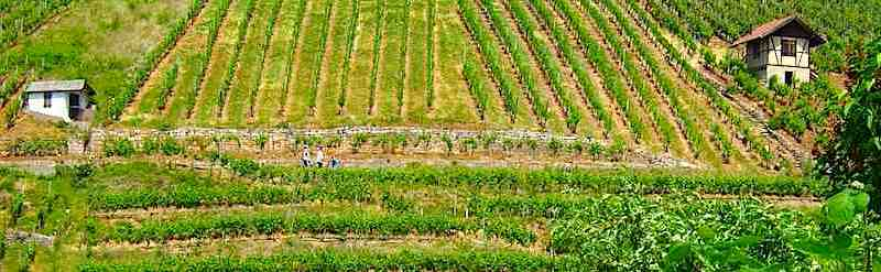 Weinwandertag Rohracker