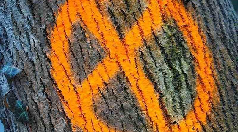 Baummarkierung