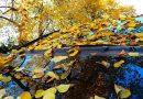 Herbstlaub: Vorsicht auf Straßen und Gehwegen!