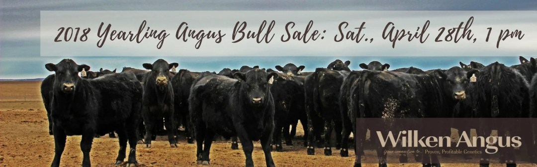Save the Date for our Yearling Bull Sale