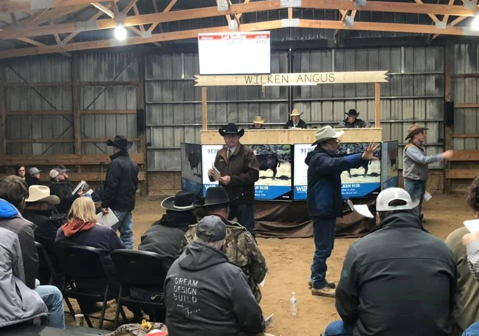 2020 Bull Sale in Review