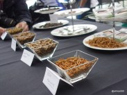 Rentokil Pestaurant - Bugs, the new bar snack?