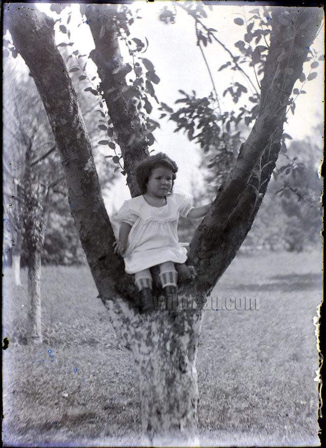 up-a-tree
