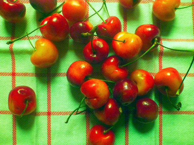 RainierCherries