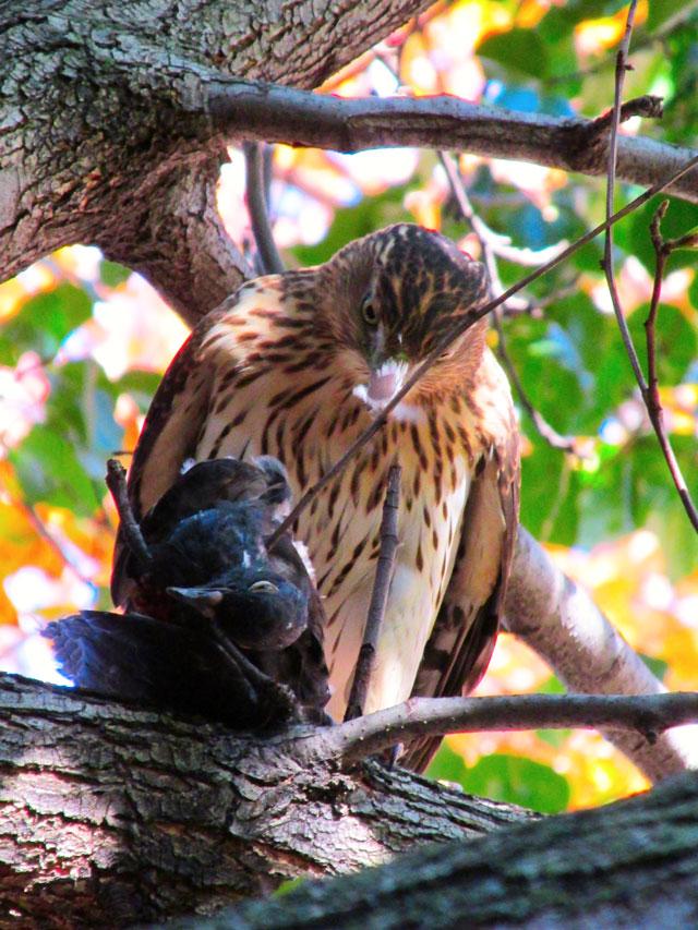 Hawk&Prey
