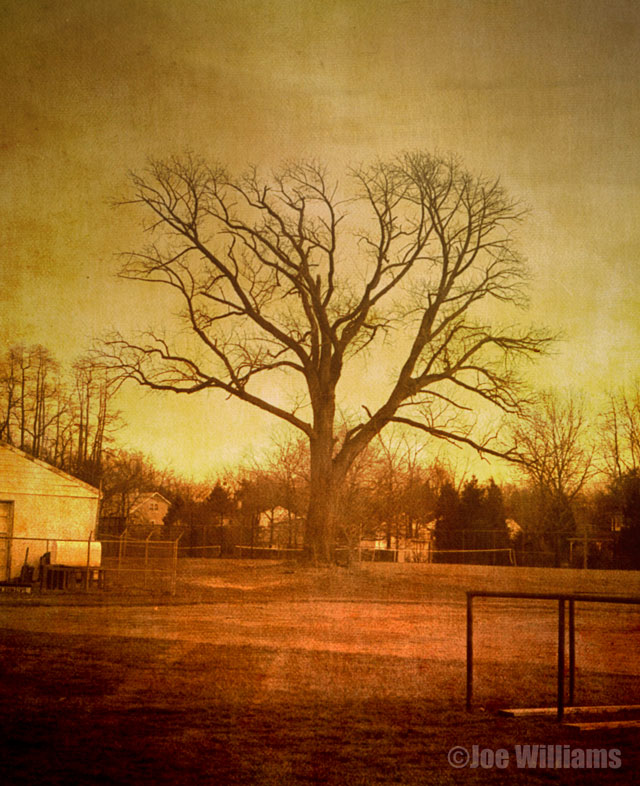 Spooky-tree-sepia