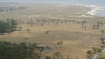 Lake Nakuru n Feb 2011