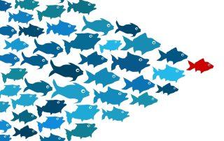 leadership coaching hull, leadership development, hr advice hull, hr consultant hull, employment law advice