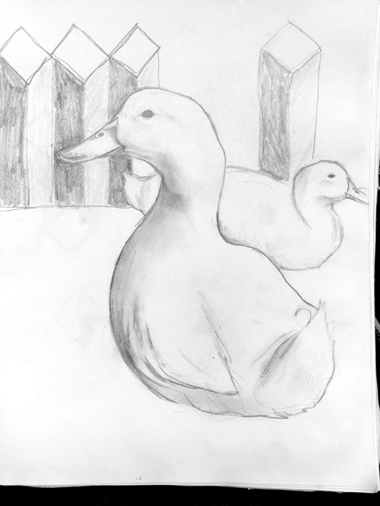 Animal Sketches Drawings Art Will Eskridge