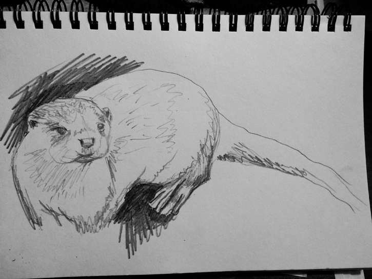 Otter Sketch Animal Art Painting Will Eskridge