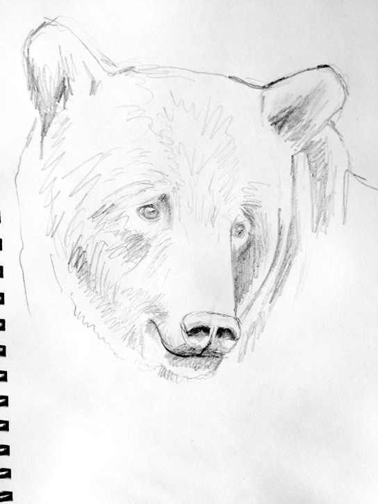 Grizzly Bear Sketch Animal Art Painting Will Eskridge