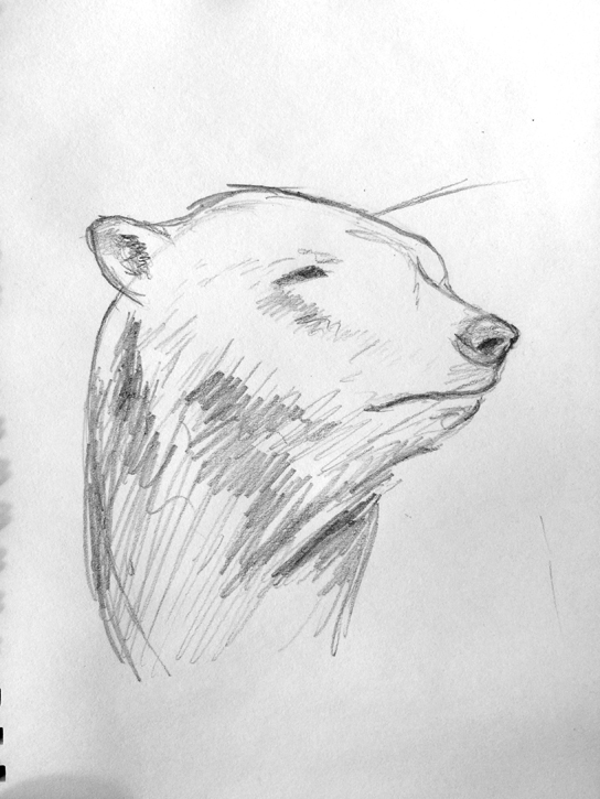 Polar Bear Sketch Animal Art Painting Will Eskridge
