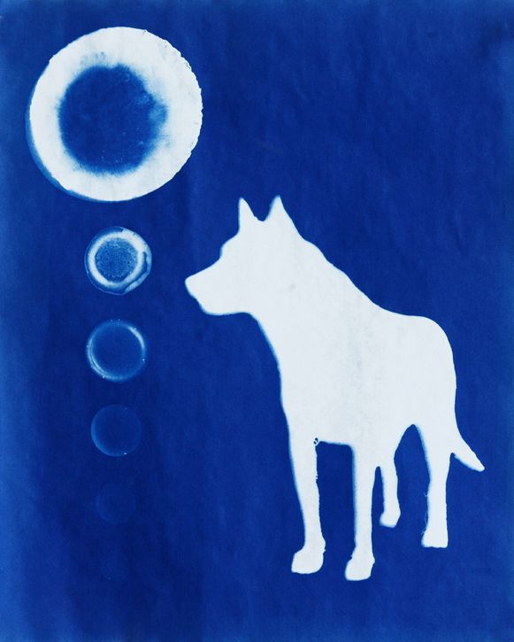 Canis Phases Animal Artist Art Cyanotype Photogram Wolf Will Eskridge