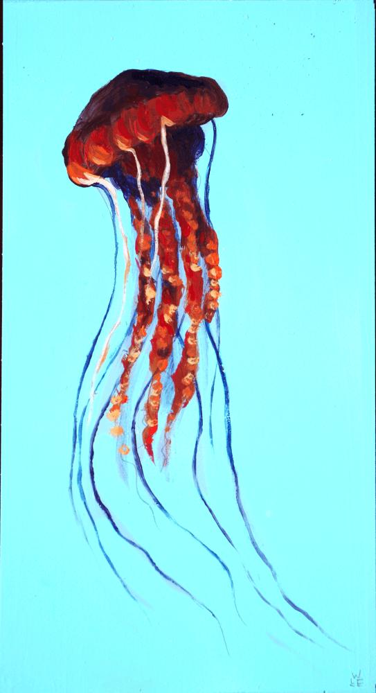 Black Sea Nettle – Day 7