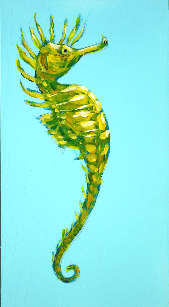 Long-snouted Seahorse – Day 9