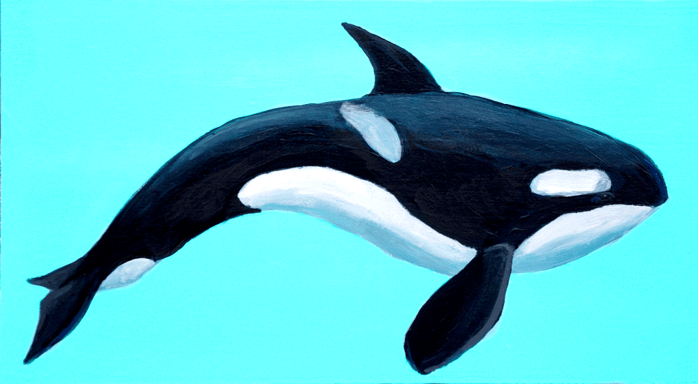 Orca Whale – Day 33