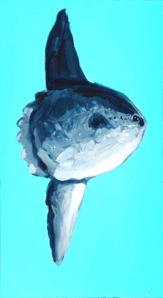 Mola Mola- Day 49