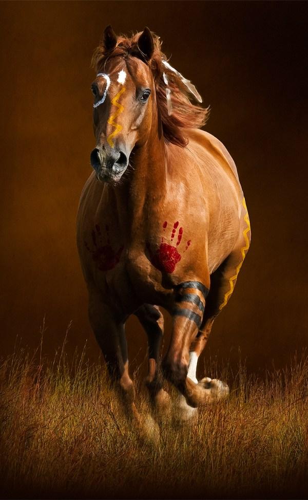 Sioux War Pony 1