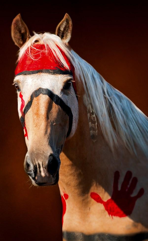 Tomahawk is an art piece of a Lakota war pony from the Standing Rock Reservation.